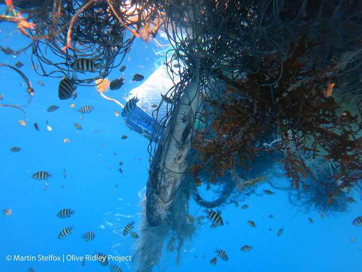 Greenpeace Releases 30×30 Blueprint For Ocean Protection
