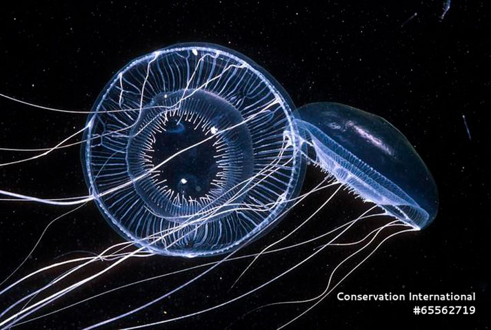 """Plastic or Jellyfish? """"Drop In The Ocean"""" VR Film Let's You See"""