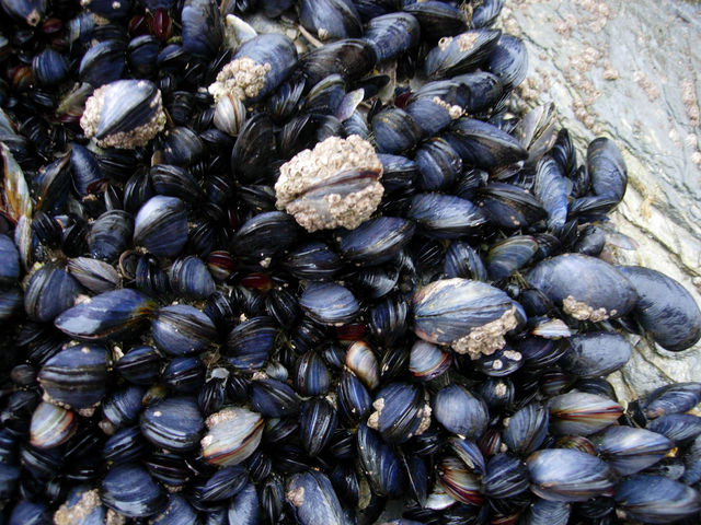 Microplastics Found In Shellfish Living In UK Waters